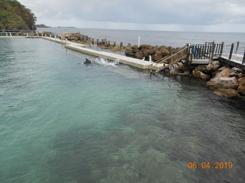 Photo de Dolphin Cove Ocho Rios
